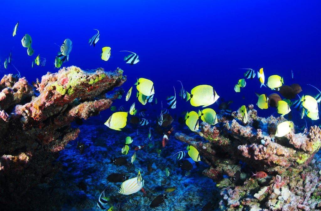 Ocean & Coastal Protection On Barbados Agenda