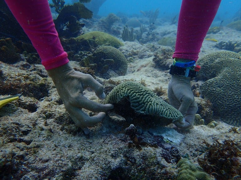 Reviving Barbados' Coral Reefs