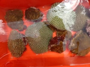 corals_in_water