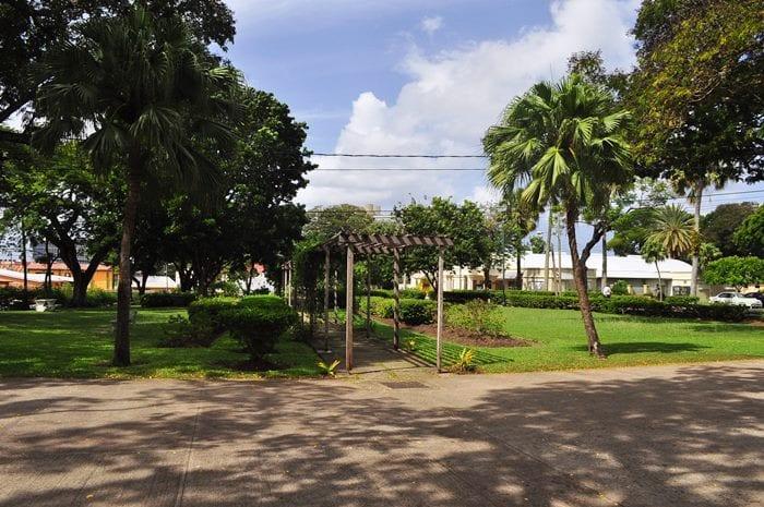 Trees in Queen's Park, Bridgetown. (FP)