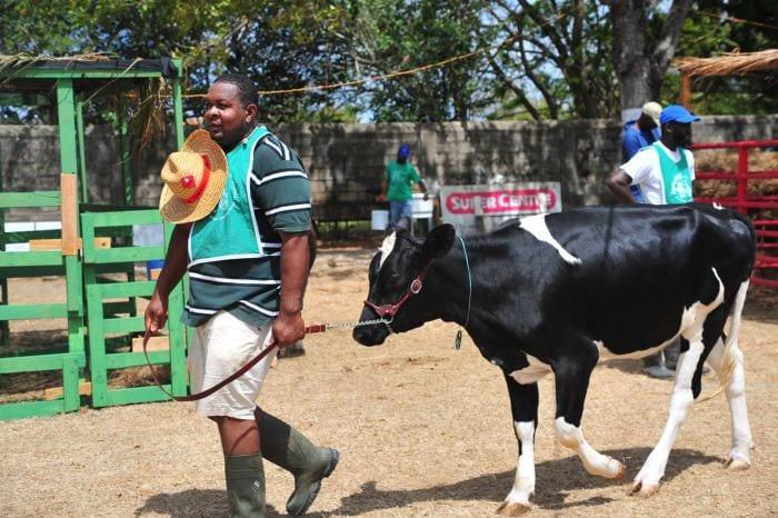 Rule Changes For Agrofest Livestock Shows