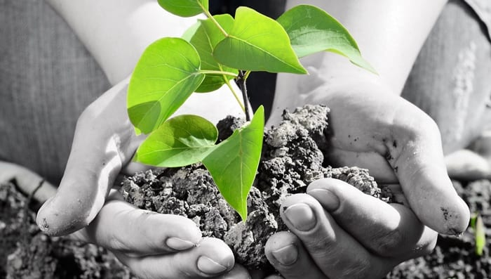 Arbor Day Exhibitors Urged To Sign-Up