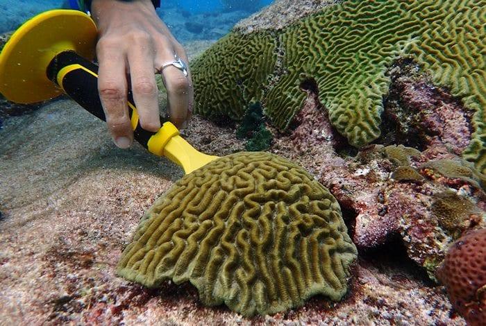CZMU: Coral Reef Transplant A Success