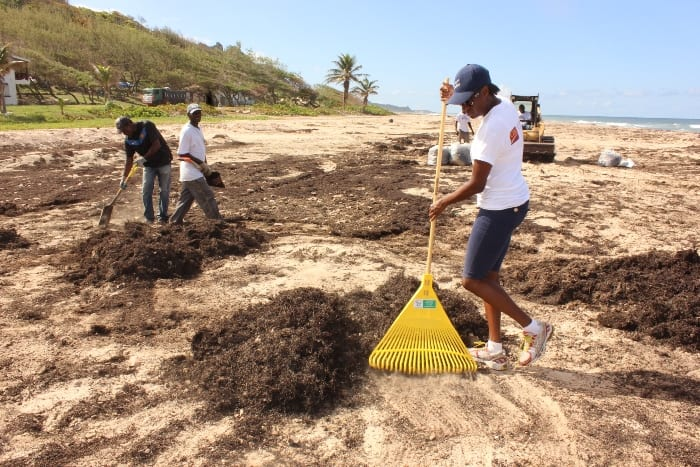 Morgan Lewis Coastal Clean-Up Cancelled