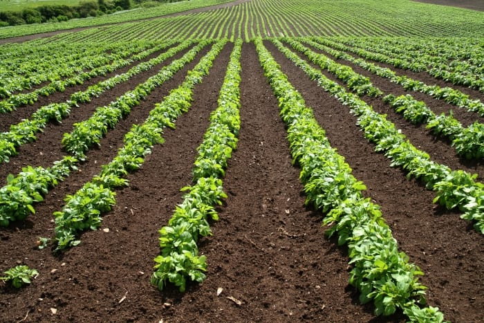 Agriculture Sector Critical To This Region
