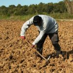 Initiatives To Aid Farmers In Thrust To Ensure Food Security