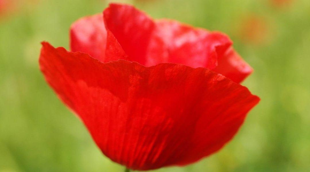 Remembrance Day Sunday, Nov. 12