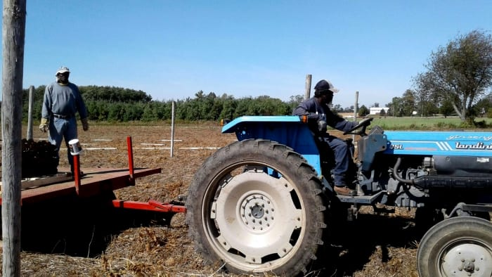 Farm Labour Programme Holding Its Own