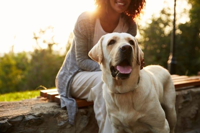 Animal Care & Control Week April 9 – 14