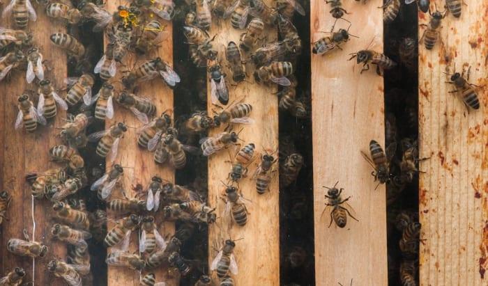 Beekeeping Workshop Starts Tomorrow