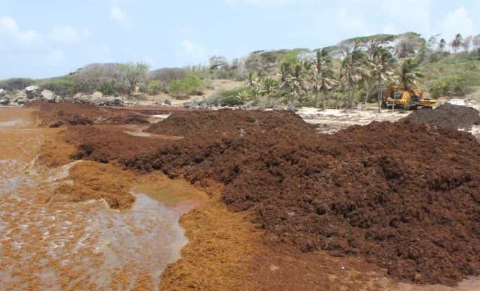 NCC Working On Cleaning Sargassum