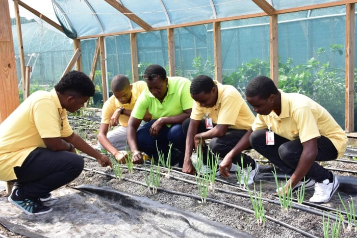 SJPI Students Trained In Protected Agriculture