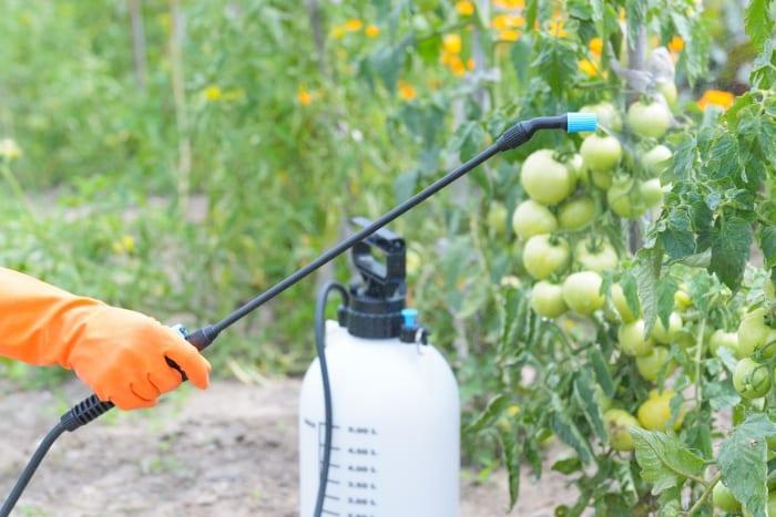 Pesticide Control Critical To Food Security