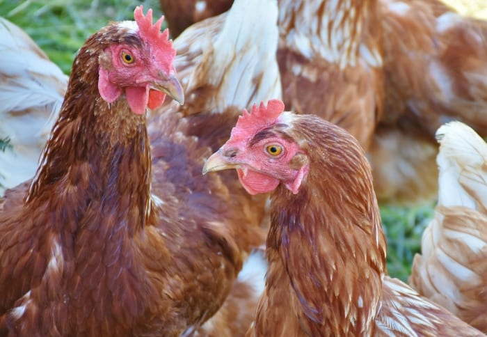 Market Study On Poultry Sector