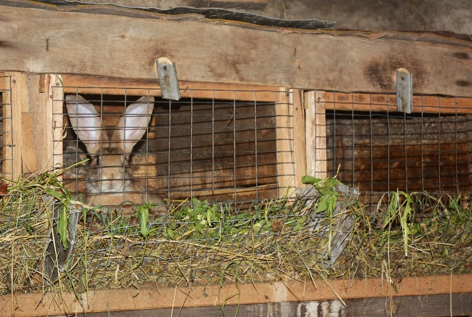 Training For Farmers In Rabbit Rearing
