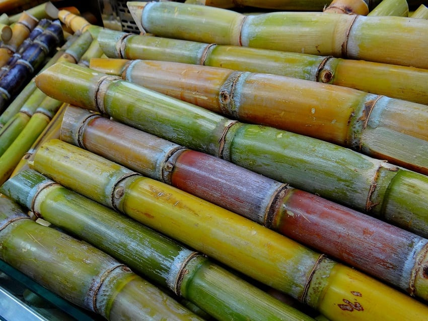 Sugar Cane Industry Still Needed