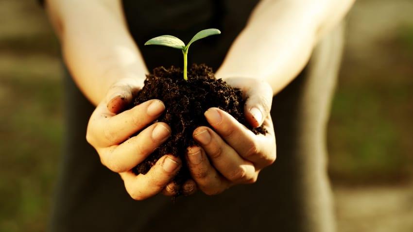 National Arbor Day Is September 22