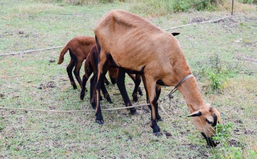Keep Pets & Livestock Inside & Away From Ash Fall