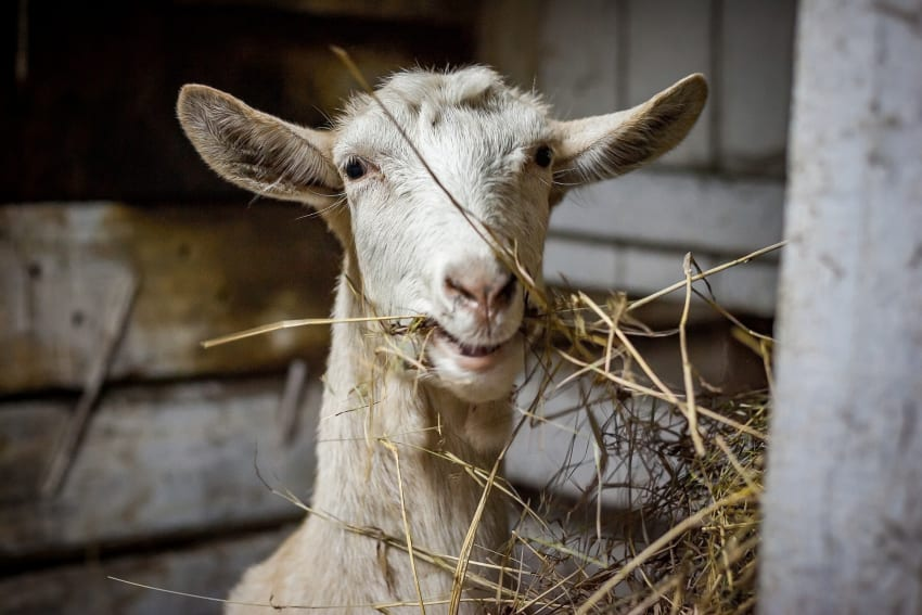 New Date For Goat Production Training