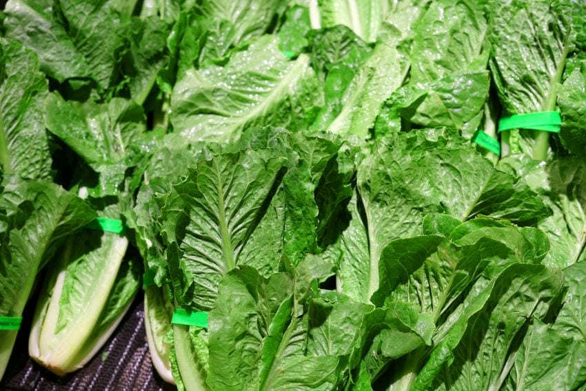 Recall On Romaine Lettuce From California