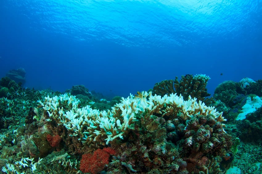 Development Assistance Needed For Blue Economy