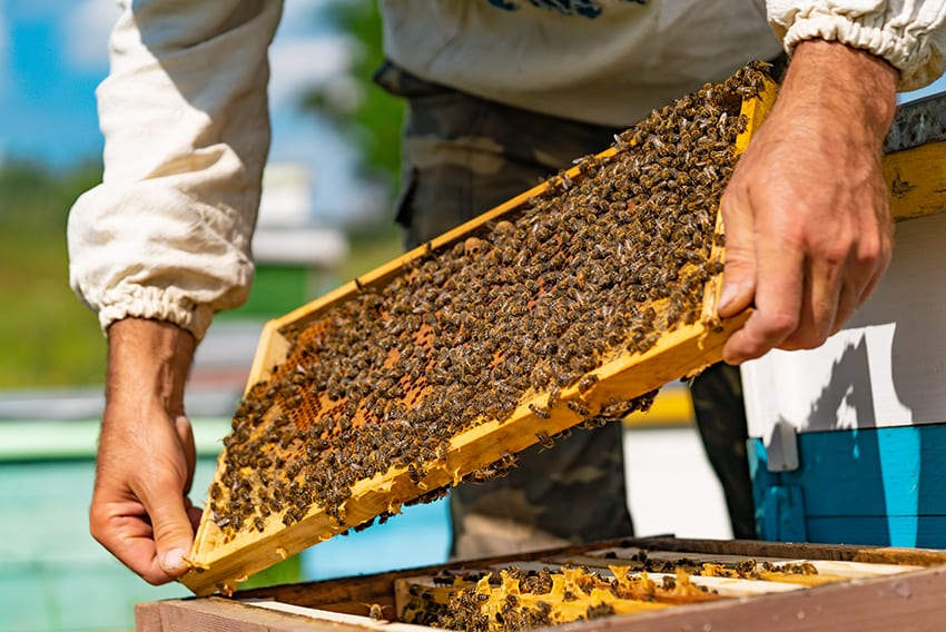 Training & Research Critical To Beekeeping Success