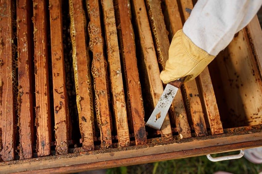 Beekeeping Forum On February 13