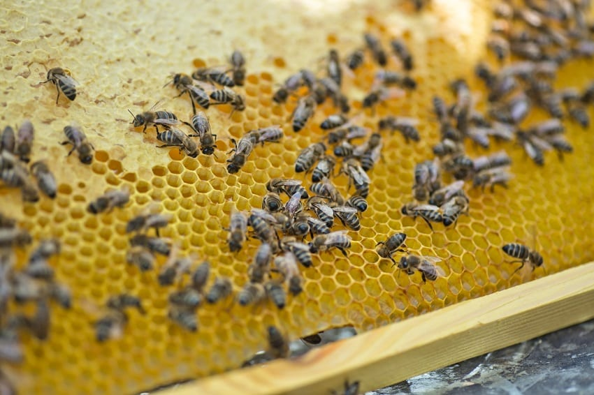 Beekeeping Industry In Barbados Abuzz