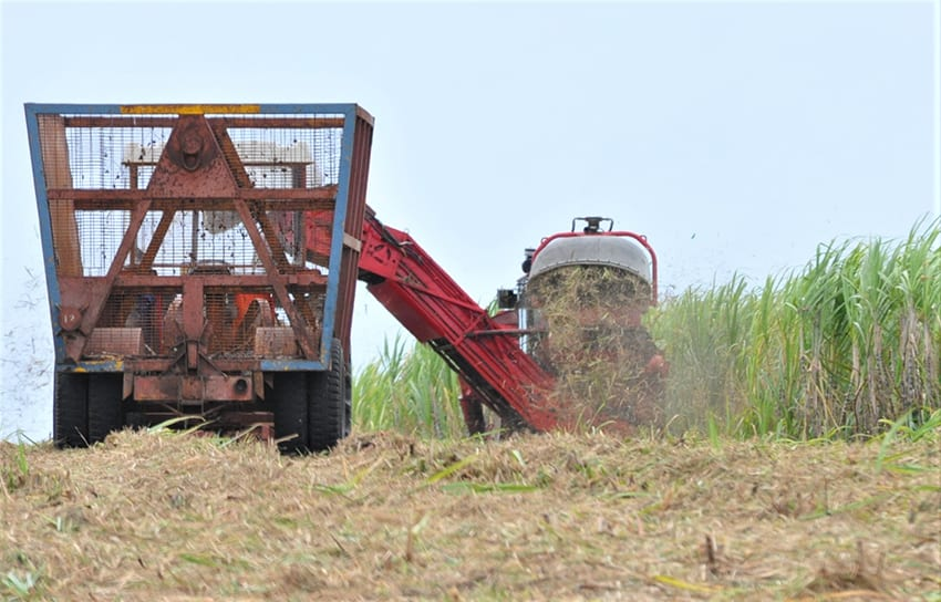 Higher Yields Projected For 2021 Sugar Crop