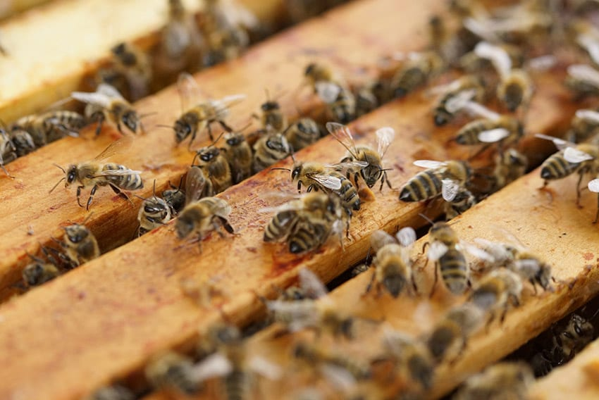 Funds Received For National Apiculture Project