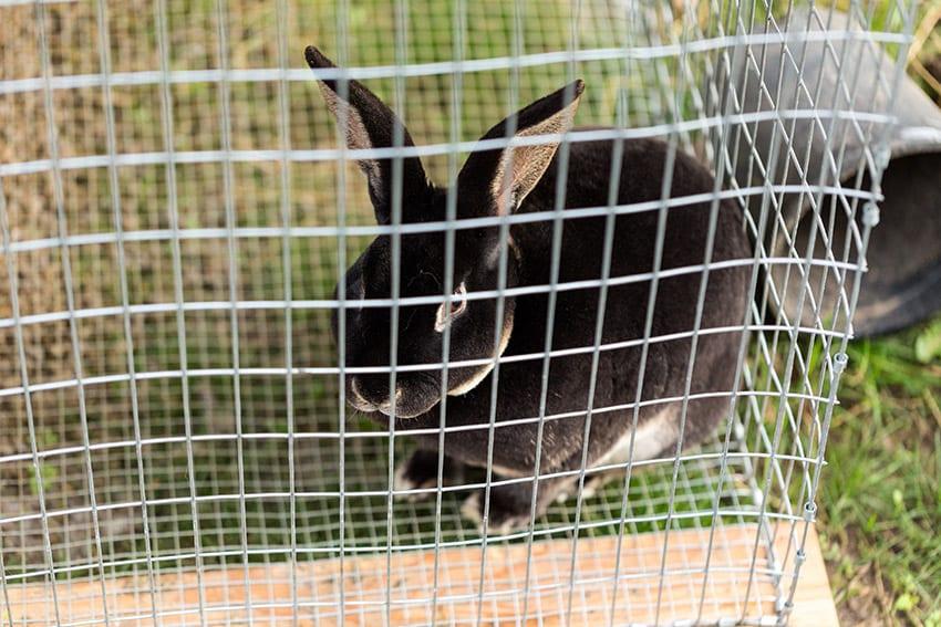 Rabbit Cage Making Workshop