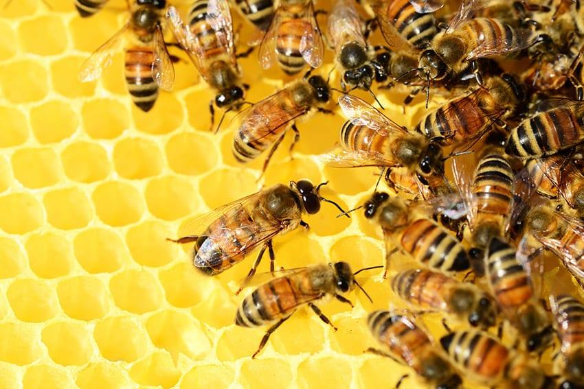Third Beekeeping Forum April 17