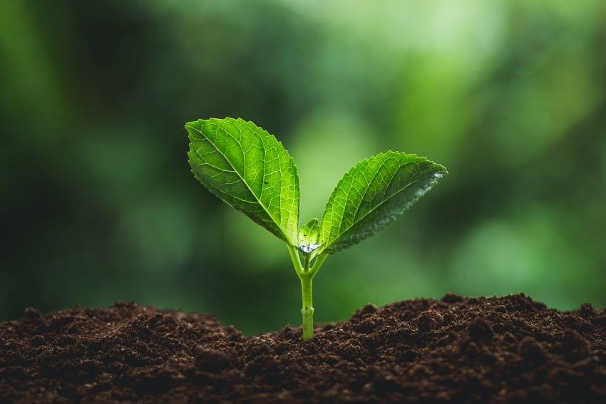 We Plantin' More Than A Million Trees