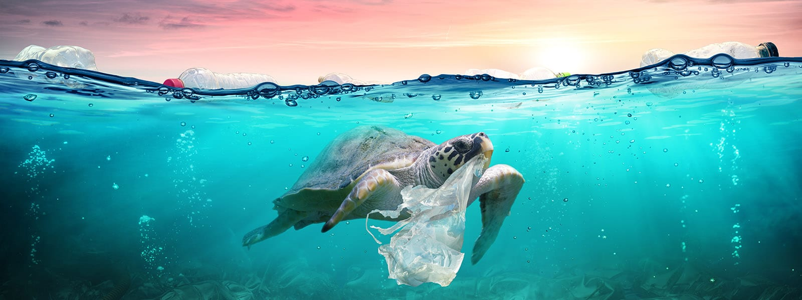 The Real Cost Of Using Petro-Based Plastics