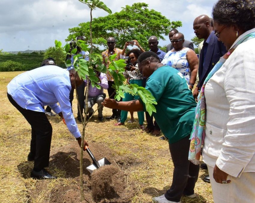 Tree Planting A Reunification Of Our People
