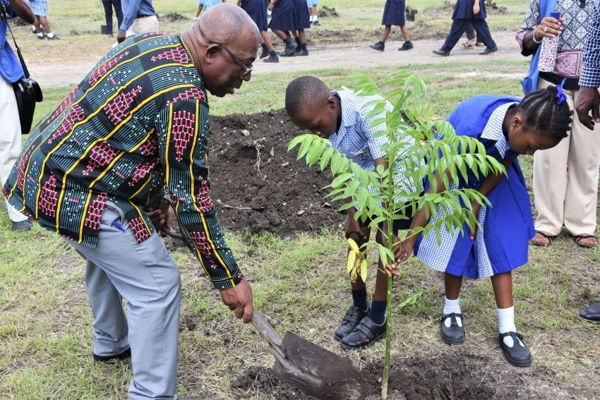 600,000 Trees For We Gatherin' Barbados 2020