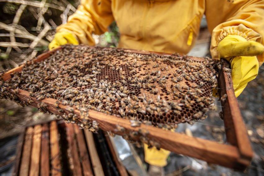 NCC's Junior Beekeeping Classes