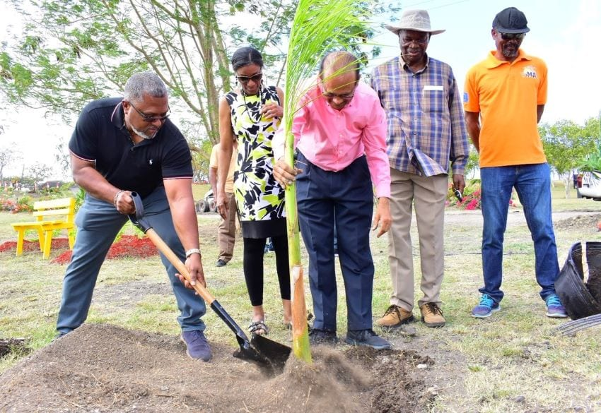 Planting Of A Palm Symbolizes Agricultural Alliance